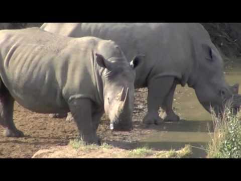 Hluhluwe Umfolozi Park – South Africa