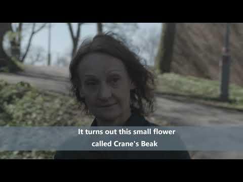 Marie Samuelsson The Crane's Beak