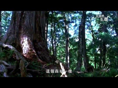 山羌 -《大自然生趣》 EP08:臺灣特有種