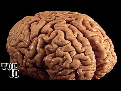 Chestii interesante despre creier