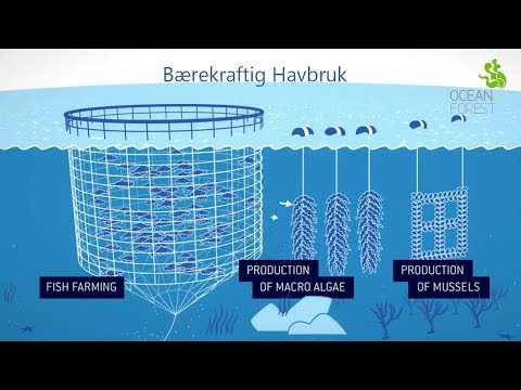Ocean Forest - Et samarbeid mellom Bellona og Lerøy Seafood