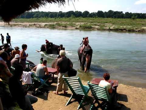 bathing for the elephants in chitwan 2009