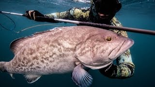 The Blue Wild Spearfishing
