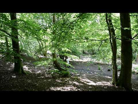 Besök den mystiska Trollskogen