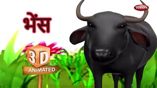 Buffalo Rhyme in Hindi | Hindi Rhymes For Kids | हिंदी कविता | Animal Rhymes For Kids in Hindi