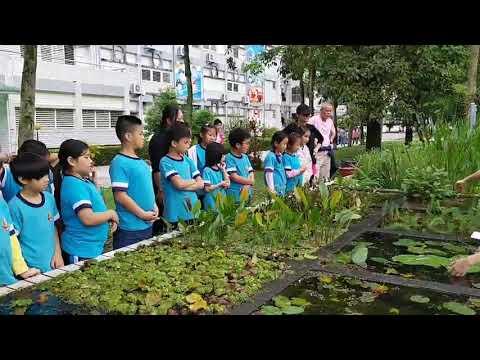 太昌國小植物生態解說社解說校園植物-胡哲豪介紹水生植物分類 - YouTube