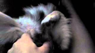 DOG Motty : Reglamando su hora de dormir