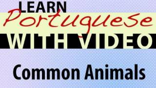 Learn Brazilian Portuguese with Video - Common Animals