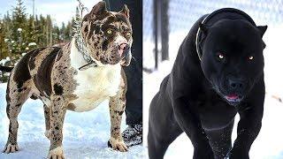 4 Gefährlichste Hunderassen, bist Du nicht der Besitzer dann halte Dich fern!