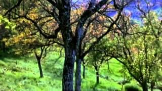 Relaxing Music Therapy - Relaxing Piano Rain Music - Nature