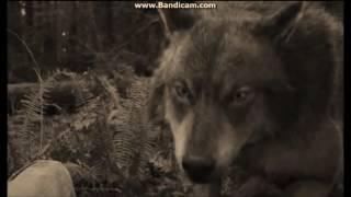Twilight Wolves - Salvation(Skillet)