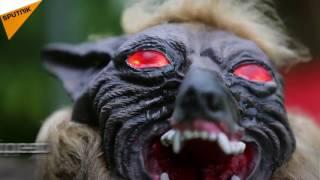 Wolf-Like Robot VS Wild Boars