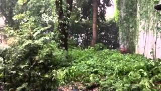 30 secondes de relaxation avec la pluie torrentielle