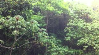 Chuva na Floresta - Rain in Forest