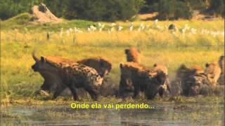 Os Últimos Leões (Leões de Okavango)