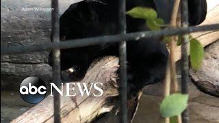 Woman attacked by jaguar at an Arizona zoo