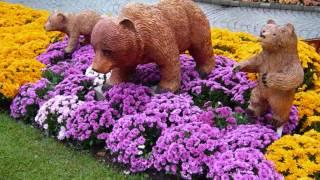 fleurs d'automne 0001