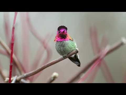 你有看過人變臉????有看過鳥會變臉嗎❣ - YouTube