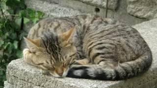 Kocici ukolebavka