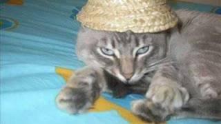 Mi gato Pompom