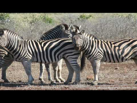 Africa – The wildlife, landscape, and people