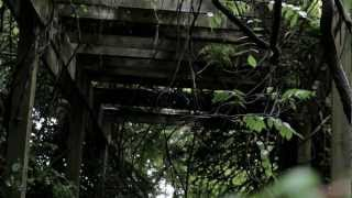 Rainy Forest Ambient Sound Effects