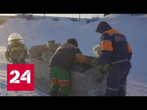 В ямальской тундре в жестокий мороз застрял снегоход с людьми