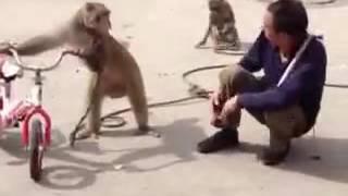Briga entre o macaco e o homem
