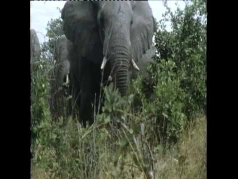 Umfolozi National Park, South Africa