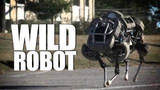 Robot Wildcat Goes Rogue!