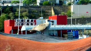 JORGE GANHÃO/MANUEL DA FONSECA  - «Vagabundo do Mar»   2012