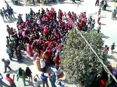 Panigram Flash Mob