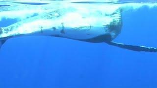 Las ballenas de la isla Reunión se vuelven agresivas ante la afluencia irrespetuosa de los turistas