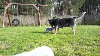 Lobuzy nie mają łatwo u Guerry - NIE pozytywne wychowywanie psów :)