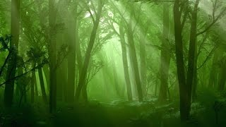 Forest Music Instrumental - Raindrop Woods