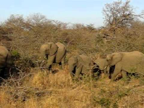 Elephants at Kapama Game Reserve