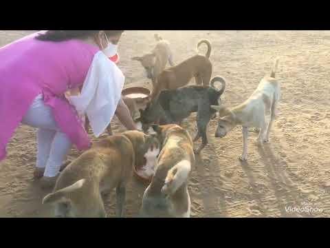 stary feeding in Gujarat