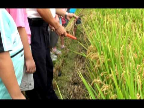種稻體驗活動_種稻過程 - YouTube