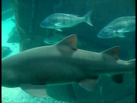 South Africa – Two Ocean Sea Life – Travel Video