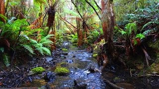 FOREST MOUNTAIN STREAM- Meditation forest music- Bridget Cameron