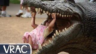 Giant Alligator Crocodile Walks Across Florida Golf Course feat Jurassik Park