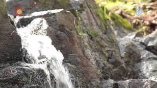 Arroyo y zona de pesca ,cascadas.