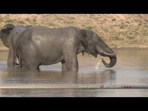 Elephants at waterhole HD – South Africa Travel Channel 24 – Wildlife