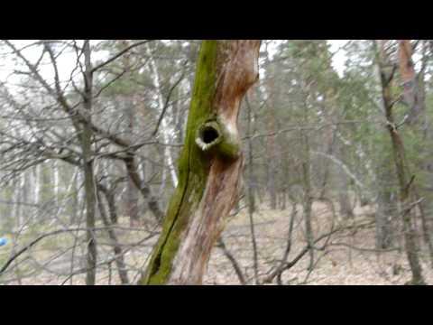В лесу P1120820