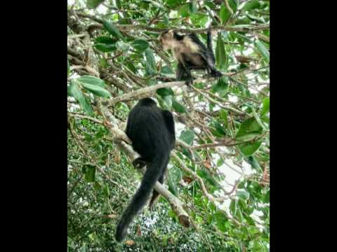 Animals of Costa Rica, Nicaragua and Panama.
