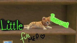 Little Tomcat ~~ Nintendogs + Cats FULL MEP!
