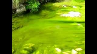 Peaceful Water Streaming and Endgame by R.E.M.