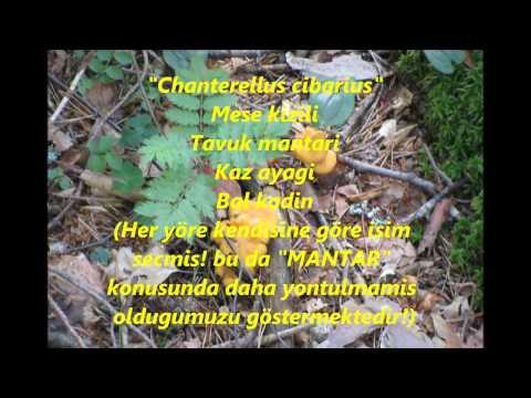 """TAS DEVRINDE"" MANTAR TOPLAMA  16.07.2011"