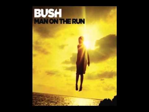 bush-broken-in-paradise-jessestoll