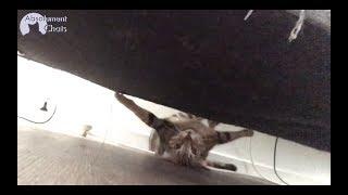 crazy cat drole de chat suspens